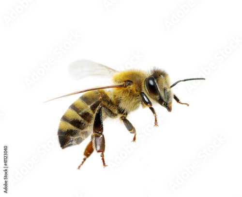 Deurstickers Bee bee