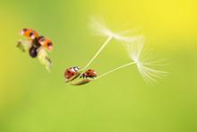 てんとう虫とタンポポ