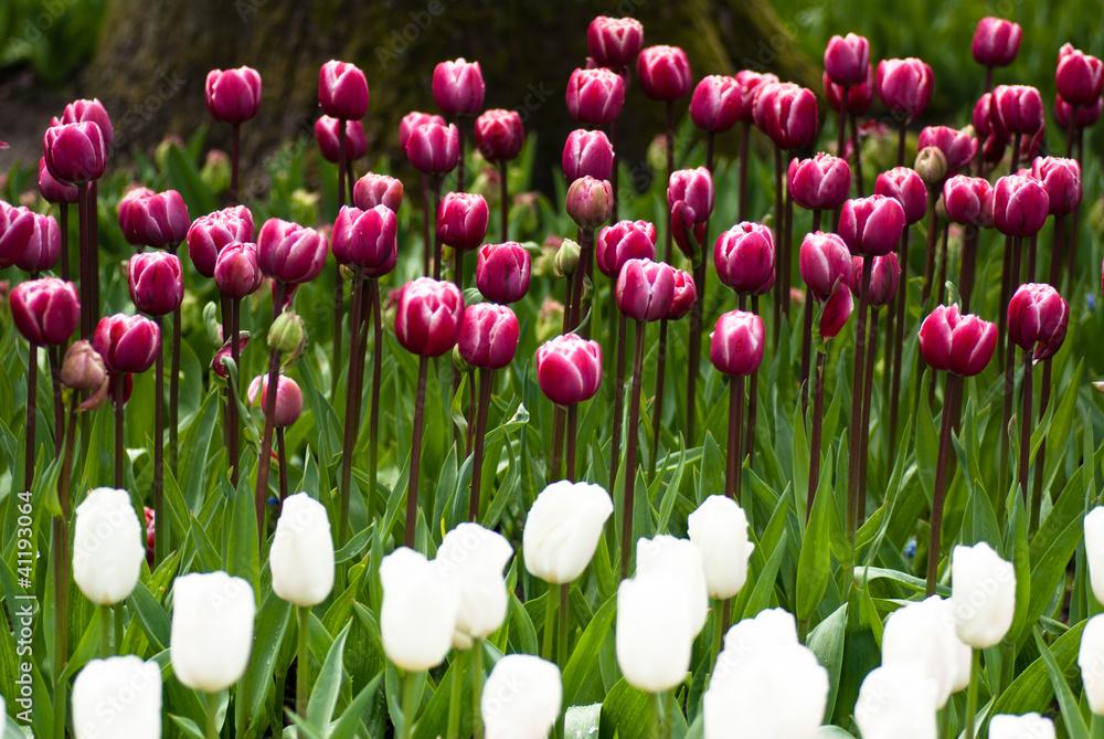 wiosenne kwiaty - obrazy, fototapety, plakaty