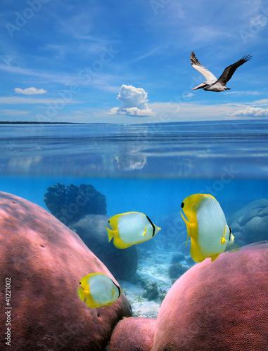Seascape nad i pod powierzchnią morza z pelikanem latającym nad wodą i tropikalną rybą w rafie koralowej pod wodą, Morze Karaibskie