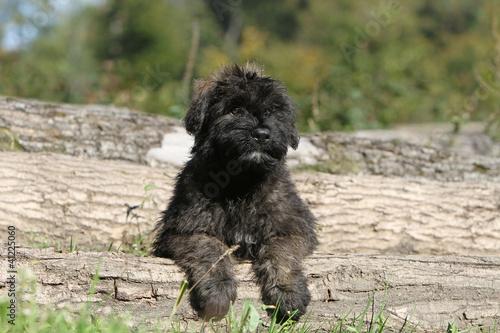 Poster de jardin Vache sweet puppy dog