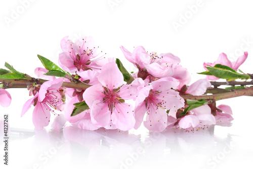 piekny-rozowy-brzoskwiniowy-kwiat-na-bialym-tle