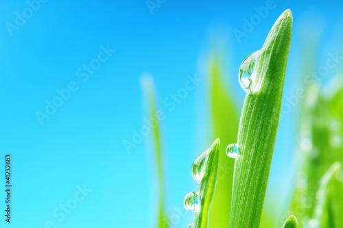 swieza-mokra-trawa-po-deszczu