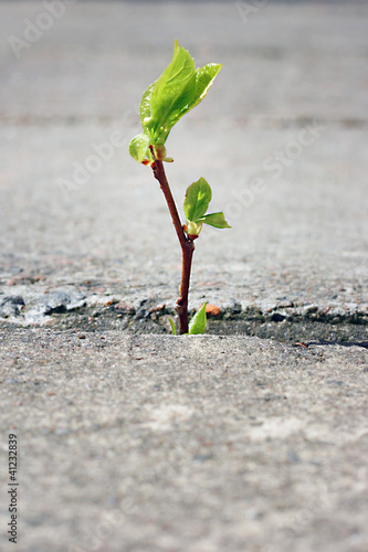Photo  tree growing through crack in pavement
