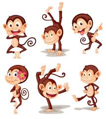 Fototapeta Monkey series