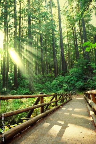 Fototapety do przedpokoju   sloneczny-las