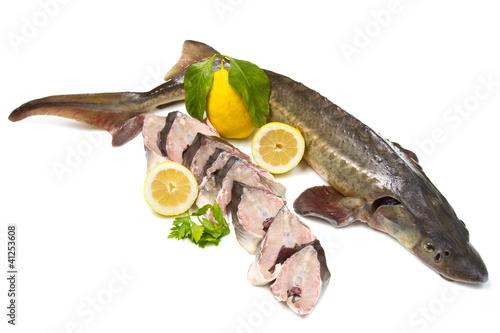 Fotografija  pesce storione
