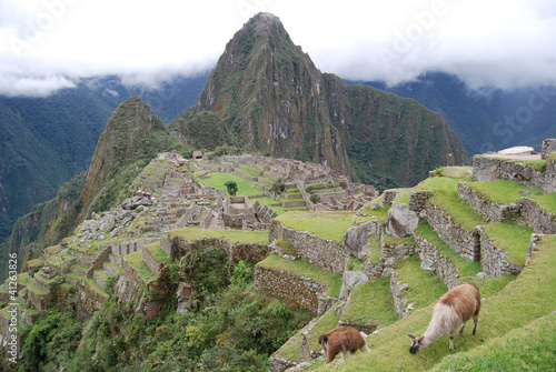 Dos llamas en las ruinas del Machu Picchu