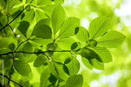 Fototapeta wiosna zielone-wiosenne-liscie