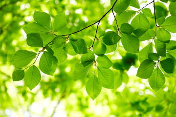 NaklejkaGreen leaves background