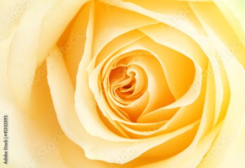 Tematy fototapet  herbaciana-roza