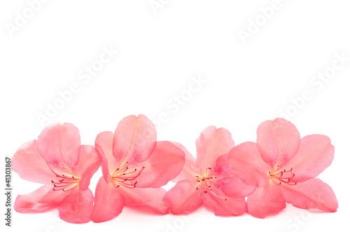 ヤマツツジの花の部分