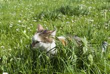 Young Cat Hides Between High Fresh Green Grass