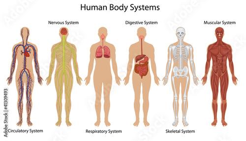 Fotografía  Human body systems