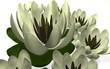 цветы на белом фоне