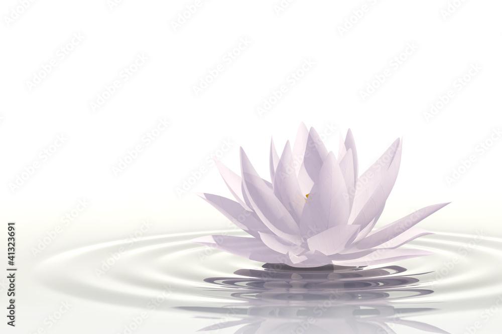 Fototapeta Floating waterlily