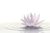 Fototapeta Kwiaty - Floating waterlily