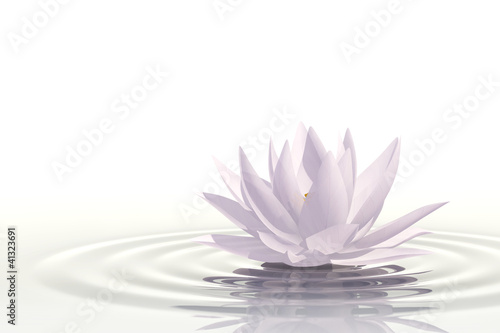 Photo  Floating waterlily