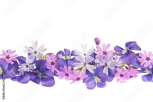 Fotografija Purple spring flower border