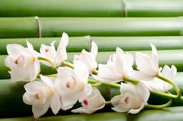 Panel Szklany Podświetlane竹をバックに白いシンビジウムの花