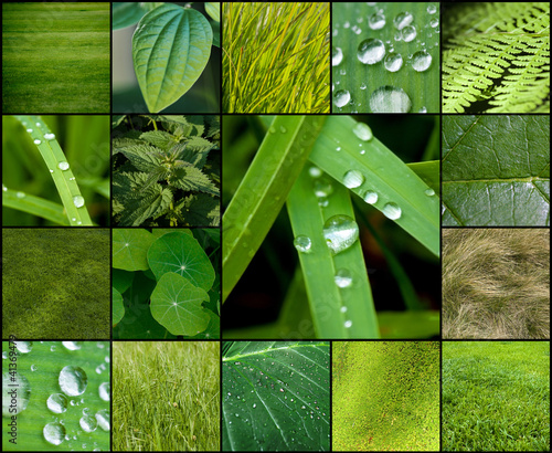 zielona-kolekcja-lisci