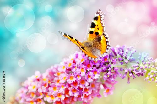 motyl-na-kwiat