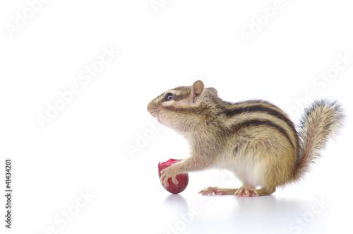 Foto op Aluminium Eekhoorn 葡萄を食べるシマリス