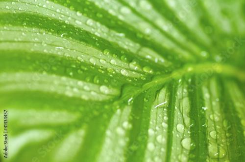 poranna-kropla-na-zielonych-lisciach
