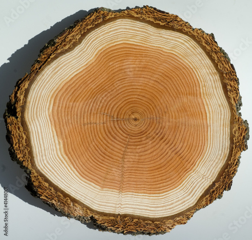 Photographie  Jahresringe, Holzscheibe