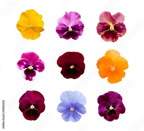 Papiers peints Pansies Pansy flowers isolated on white background