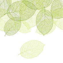 Fresh Green Leaves Background ...