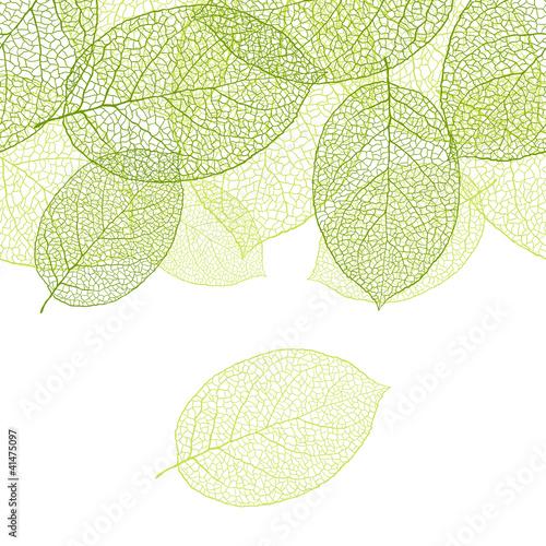 Plakaty zielone  fresh-green-leaves-background-vector-illustration
