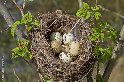 Valokuva  Vogelnest mit Eiern