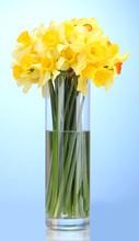 Beautiful Yellow Daffodils In Transparent Vase
