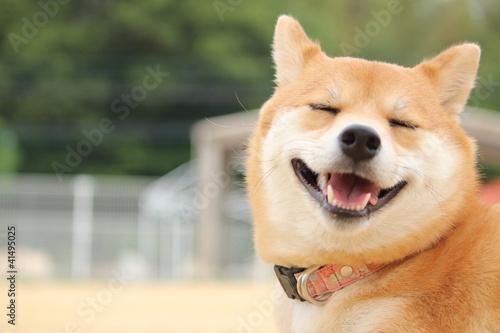 Papiers peints Chien 笑顔の柴犬