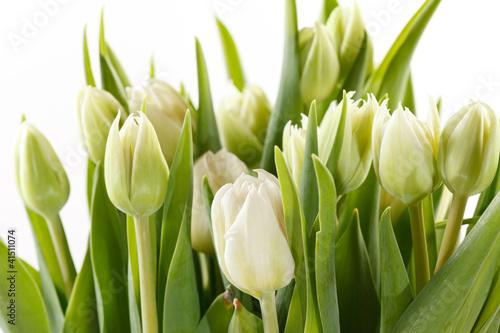 Poster de jardin Tulip nice tulips
