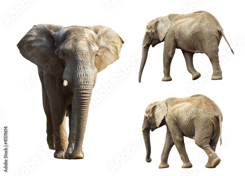 Collection of three elephants isolated on white background