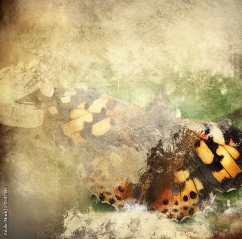 Garden Poster Butterflies in Grunge Butterfly overlaid with grunge texture