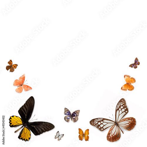Deurstickers Vlinder A variety of butterflies