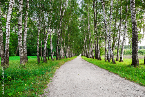 Tuinposter Berkbosje path in birch forest