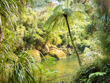 Lush Green Rainforest Along Po...