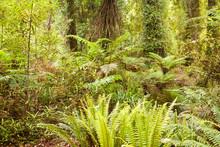 Lush Green Sub-tropical NZ Rainforest
