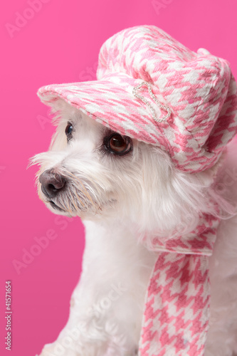 Photo  Fluffy dog wearing winter fashion