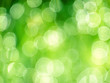 canvas print picture - Green bokeh abstract light background