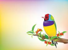 Gouldian Finch Vector