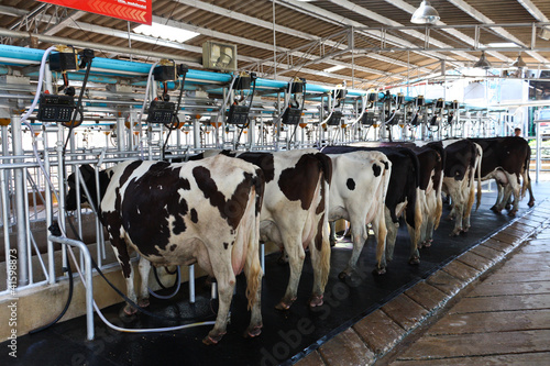 Fotografia Cow milking facility