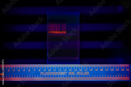 Valokuva  Electrophoregram of DNA separation