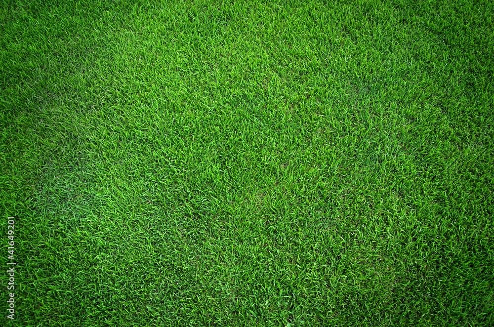 Fototapety, obrazy: Green grass texture background