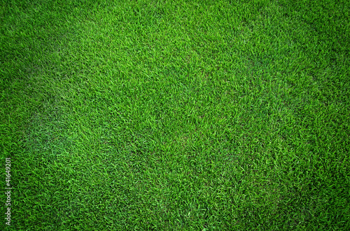 Poster de jardin Vert Green grass texture background