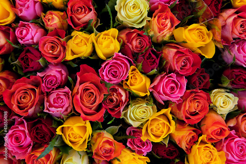 Ingelijste posters Roses Flowers. Colorful roses background